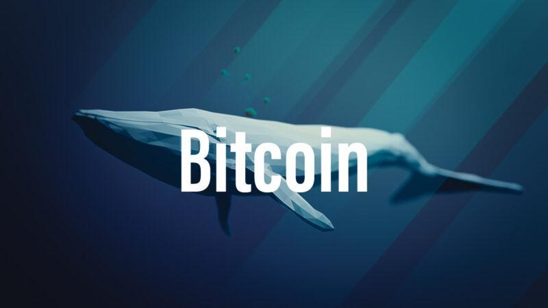 Nouveau record: Une baleine déplace 1,15 milliard de dollars en Bitcoin